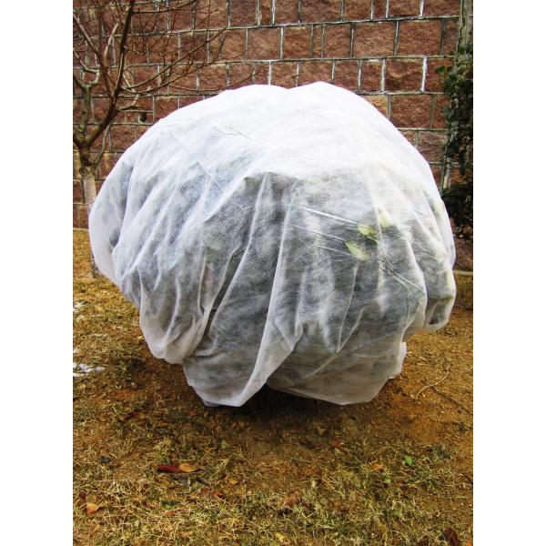 Frost fleece dug 1,6x10m